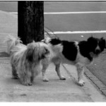 02-02D-dogs2